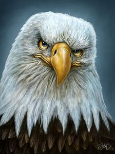 Bald Eagle Totem by Patrick LaMontagne, via Behance