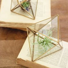 Priceless Terrariums - Set of 2