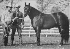 Dry Doc Dry Doc is my horse's great grandad