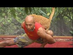 #Yoga Trainer Vs The Cat - #funny #cat