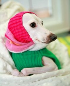 DIY Five Minute Upcycled Pet Snood or Dickie - Thehomesteadsurvival