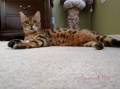 Whiskers & Paws November 2016 Edition (6)