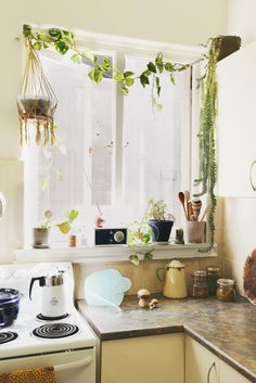 Plants in the kitchen!
