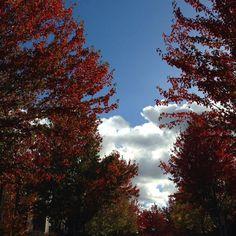More autumn #autumn #leaves #colorful #bluesky #clouds #portland
