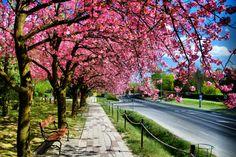 Zalakaros város - Hungary, Budapest, Sidewalk, Country Roads, Travel, Viajes, Side Walkway, Sidewalks, Trips