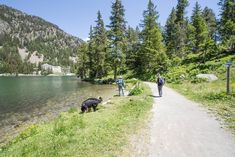 Champex-Lac Seen, Mountains, Nature, Travel, Europe, Time Out, Swiss Guard, Nice Asses, Landscapes