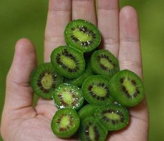 Amazon.com : Best Garden Seeds Heirloom Cocktail Miniature Kiwi Kiwiberry Berry Hardy Actinidia Arguta Fruit Seeds, Professional Pack, 30 Seeds / Pack : Patio, Lawn & Garden