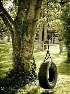 The old tire swing tree