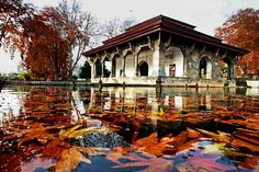 """""""Leaves of #chinar trees adore the water bodies of #nishatbagh Mughal Garden as the autumn gives way to winter with days becoming shorter. Photo: Nissar…"""""""