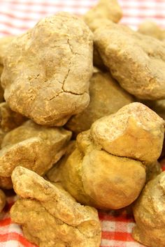 When in season, Conti provides our clients white truffle (Tuber Magnatum) available for sale or special order.