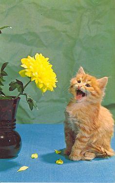 cat screaming at flower