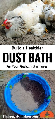 Your chickens will dust bathe naturally, so why not build them a healthier spot to get rid of mites and lice? This dust bath contains soil and diatomaceous earth - and takes only 5 minutes (and less t (Chicken Backyard Ideas) Portable Chicken Coop, Best Chicken Coop, Backyard Chicken Coops, Chicken Coop Plans, Building A Chicken Coop, Chicken Tractors, Chicken Coop Pallets, Dust Bath For Chickens, Raising Backyard Chickens