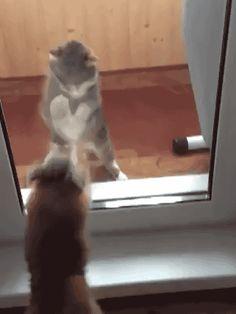 Un perro enojado contra un gato enojado contra una puerta de vidrio enojada: | 19 increíbles batallas épicas entre perros y puertas