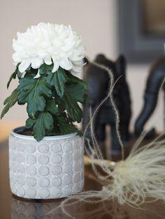 Weekend og sommerblomster – Ingrid Tunheim December 22, Tattoo Artists, Planter Pots, Instagram Posts, Flowers, Diana, Green, Love, Royal Icing Flowers