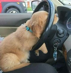 So tired to drive #dogs