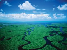 Another gorgeous South Florida day in the Everglades!