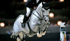 """ahorsecalledtimber: """" Marcus Ehning's Cornado NRW, FEI World Cup Finals in Lyon, France Source: Noelle Floyd/FEI """" Funny Pig Pictures, Funny Pigs, Cute Ponies, English Riding, Hunter Jumper, Boy Poses, Show Jumping, Horse Girl, Equine Photography"""