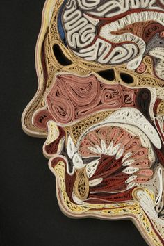 Artist Lisa Nilsson creates beautiful anatomical cross sections of the human body using rolled pieces of Japanese mulberry paper, a technique known as quilling or paper filigree. Quilling was first practiced by Renaissance nuns and monks who made artistic use of the gilded edges of worn out bibles, and later by 18th century ladies who made artistic use of lots of free time.