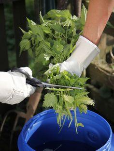 Brennessel-Jauche wirkt düngend für Gemüse und vertreibt Schädlinge.(Foto: MSG/Martin S.)