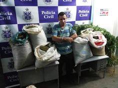 NONATO NOTÍCIAS: PINDOBAÇU : POLICIAIS CIVIS PRENDEM HOMEM COM 56,6...