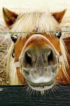 This looks just like my first Shetland pony named, Hippy. I bought him from my camp counselor for $40. I was so proud.