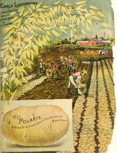 Maule's seed catalogue for 1889 : free to all