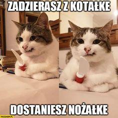 Animal Memes, Funny Animals, Cute Animals, Hot Bad Boy, Polish Memes, Weekend Humor, Komodo Dragon, Wtf Funny, Anime Chibi