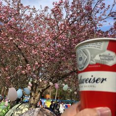 schroeder headzに沖さん来た!聴きながら2杯目也♪ シアワセ〜♪ #ARABAKI San Pellegrino, Beverages, Drinks, Soda, Canning, Instagram Posts, Drinking, Beverage, Soft Drink