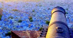 Rajasthan Classical Tour - Custom made Private Guided India Tour Packages - Quality and Value for Money Holidays in India by Indus Trips - http://www.industrips.com/rajasthan-classical-tour/ India Tour, India Travel, Tour Guide, Custom Made, Trips, Viajes, Travel, Traveling, Travel Guide