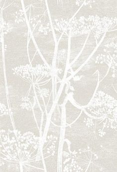 Tapeta Cole & Son Cow Parsley The Contemporary Selection Luxury Wallpaper, Contemporary Wallpaper, White Wallpaper, Wallpaper Roll, Designer Wallpaper, Chinese Wallpaper, Wallpaper Samples, Wallpaper Online, Print Wallpaper