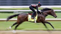 """Orb works at Churchill Downs on Monday, May 29, 2013. On hand for the workout was Daisy Phipps Pulito, representing the Phipps Stable that is headed by her father, Ogden Mills Phipps. """"Orb went really well,"""" she said after the work. """"This is a nice position to be in with a horse like this."""""""