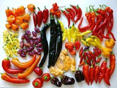 . Hottest Chili Pepper, Some Like It Hot, Growing Vegetables, Sushi, Peach, Stuffed Peppers, Ethnic Recipes, Food, Gardening