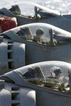 ♥ Spanish Harriers