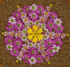 Данмала - мандала из цветов