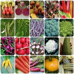 Rainbow Vegetables Grow Your Own Kits 6 Varieties Allotment Gardening Gift Set