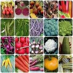 Rainbow Garden Seed Combo Pack