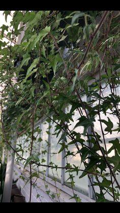 Greenhouse Pictures, Plants, Plant, Planets