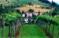 Vineyards and wineries in Tuscany, Italy.