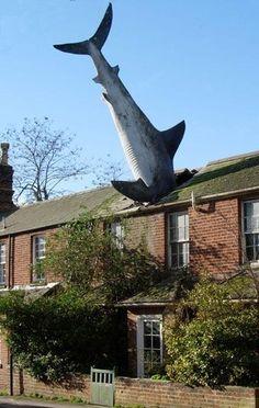Shark Crash Roof: Humor at the apartment block.