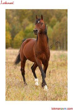 http://www.lokmanavm.com/afrodizyak-etkili-urunler Horse At Beygir Kısrak Foal @LokmanAVMcom #LokmanAVM #Bitkisel #Dogal #Organik #At #Beygir #Tay #Kisrak #Atgiller #Horse #Foal #Binek #KosuAti #Atlar #Ciftlik #Bag #Bahce #Yaris #AtYarisi #AtYarislari #Binici #Seyis #AtArabasi #Kosucu #Yarisci #Yarislar #Jokey #Arap #Arab #ArapAti #ArapAti #Afrodizyak #Cinsel #Orgazm #iktidarsizlik #Penis #Vajina #Passion #Seky #Sex #Erotic #Erotik #Erkek #Kadin #Bayan #Man #Woman #Gifs #Google #Pinterest