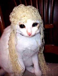 Anyone wanna rp? Funny Animal Memes, Cute Funny Animals, Funny Animal Pictures, Cute Baby Animals, Cute Cats, I Love Cats, Sad Cat Meme, Cat And Dog Memes, Funny Cat Faces