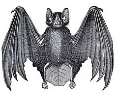 vintage halloween bat clip art from the graphics fairy!