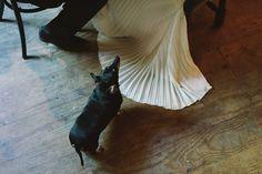 Midwinter Night's Dream Winter Wedding Dog Wedding, Supernatural, Floral Design, Night, Winter, Pretty, Weddings, Dogs, Winter Time