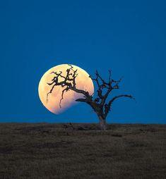 Shoot The Moon, Moon Pictures, Lunar Eclipse, Beautiful World, Civilization, Twilight, Congratulations, Presents, California