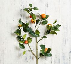 Bring a bright seasonal accent to a room with our Faux Orange Branch. It's assembled by hand and resembles a freshly picked garden clipping. Ramen, Alocasia Plant, Faux Flower Arrangements, Wall Candle Holders, Orange Leaf, Faux Plants, Fake Flowers, Artificial Plants, Hanging Plants