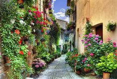 Charming - love the pathway and containers spilling with flowers