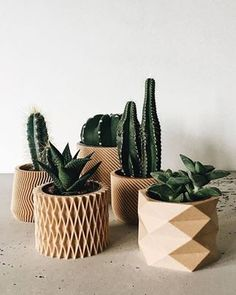 of 4 small indoor planters - Original planter gift ! : We bet you have the perfect place for these printed plantersSet of 4 small indoor planters - Original planter gift ! : We bet you have the perfect place for these printed planters Wooden Planters, Indoor Planters, Diy Planters, Succulent Planters, Indoor Cactus, Plants Indoor, Cactus Terrarium, Indoor Gardening, Terrariums