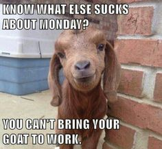 Truth. Too bad I don't have a goat