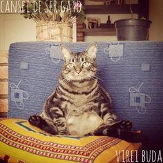 Cansei de ser gato, tô na matéria do taofeminino! - O gato Chico já compôs looks inspirados em Hello Kitty, Raul Seixas, Elvis Presley...