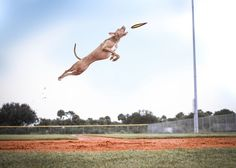 Hd Photos, Stock Photos, Free High Resolution Photos, Image Gifts, Grass Field, Dog Wallpaper, Mobile Application Development, Free Dogs, Green Grass